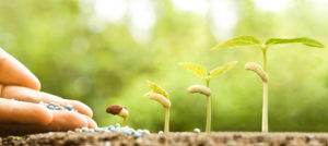 hand nurturing young baby plants growing in germination sequence on fertile soil with natural green background