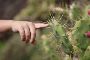 Tocando un cactus