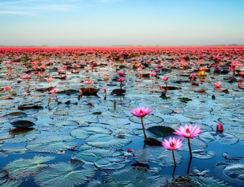 Lotus-Effekt: Potentiale entfalten & Unerfreuliches abperlen lassen