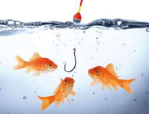 Bitte anbeißen! Talente finden & binden:  die besten Strategien für Ihr Unternehmen